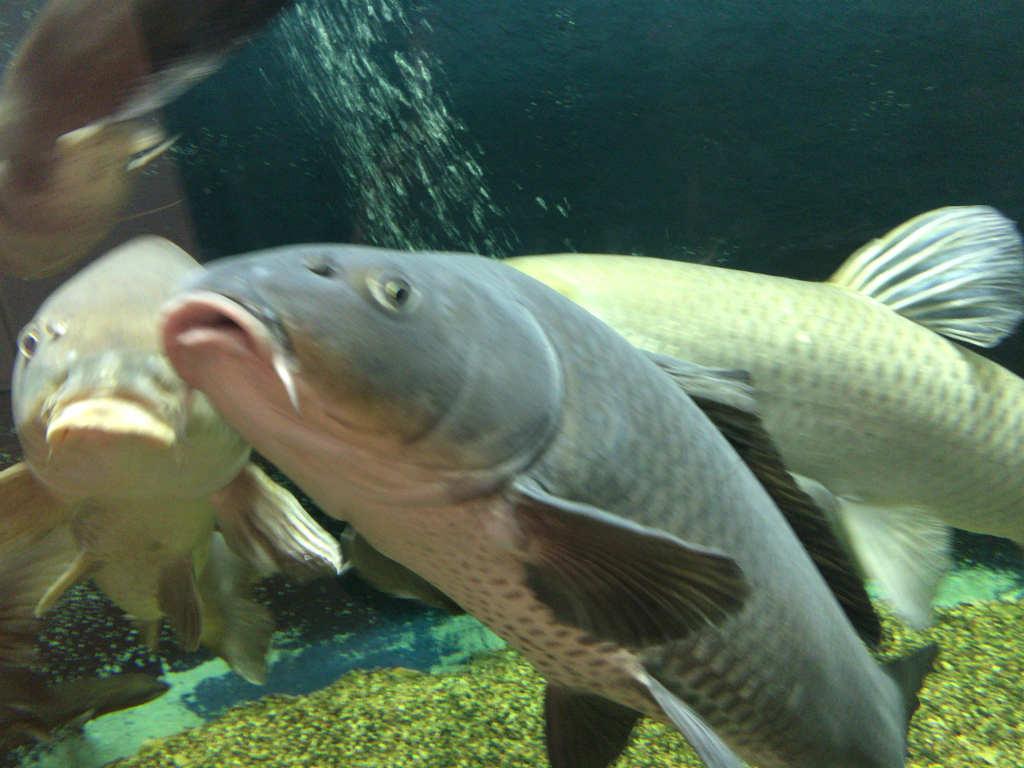 でけー魚2
