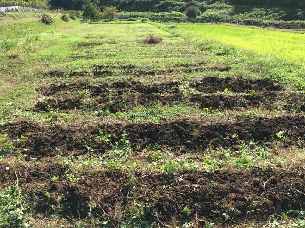 まっさらな畑