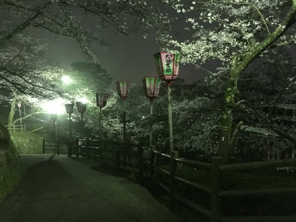 ボンボリのない夜桜