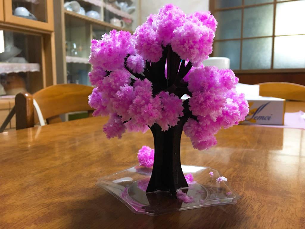 マジック桜4