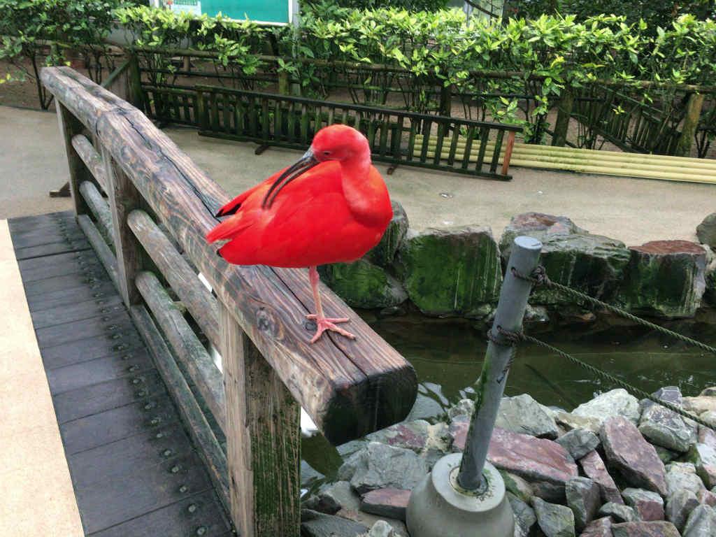 松江フォーゲルパーク17