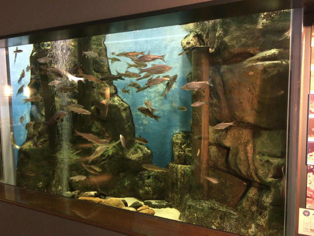流石に水族館