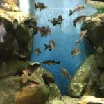 流石に水族館2