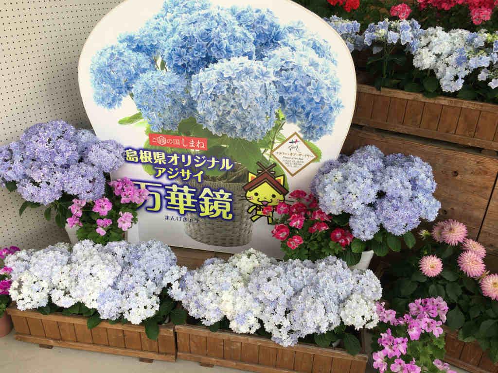 花の郷11